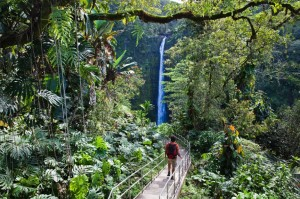 Man walking towards Akaka Falls